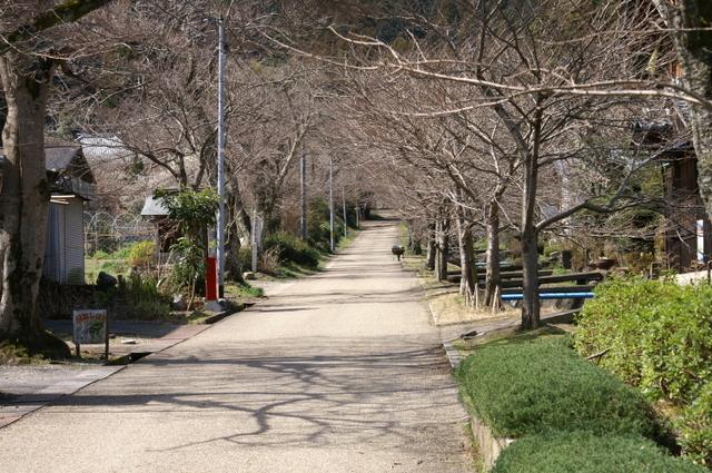 徳源院清滝寺への参道
